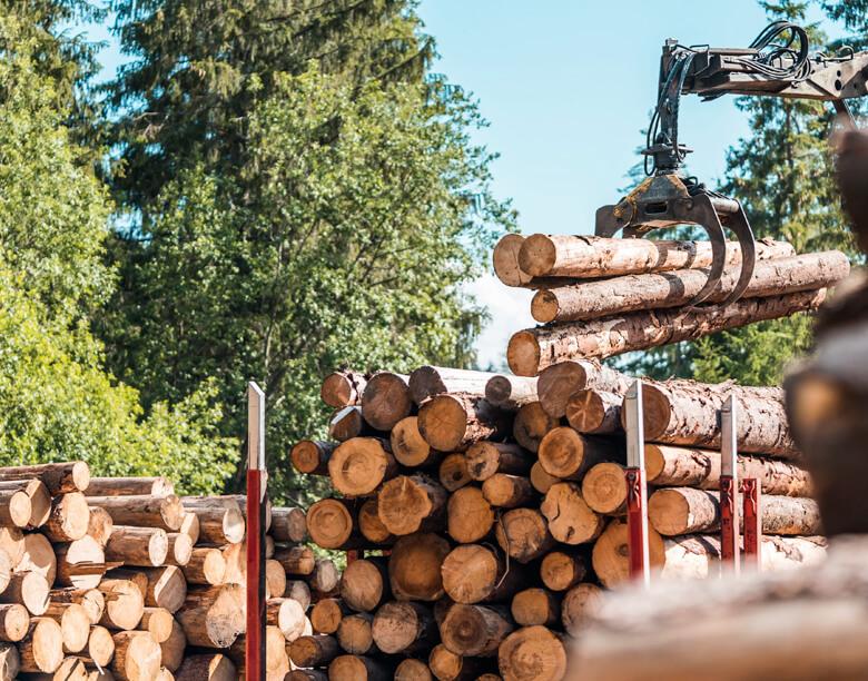 industria-forestal